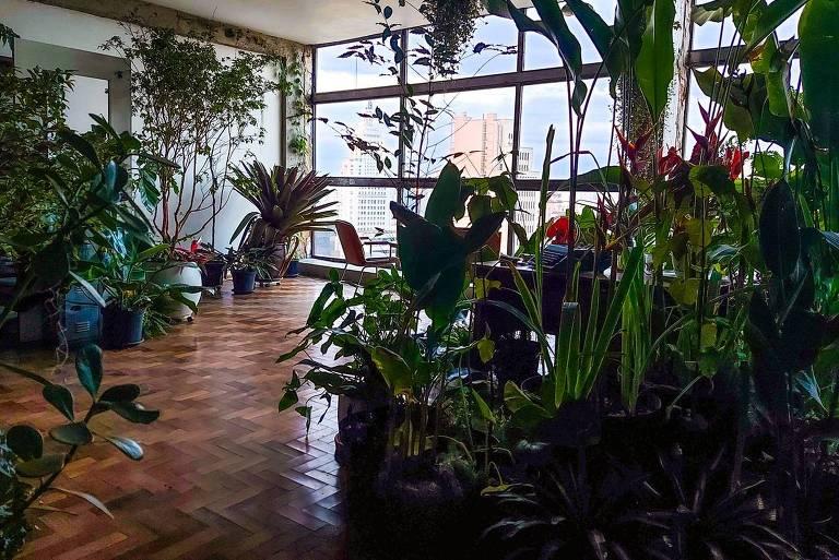 Espaço bem iluminado e cheio de plantas. Chão de madeira e vista para são paulo