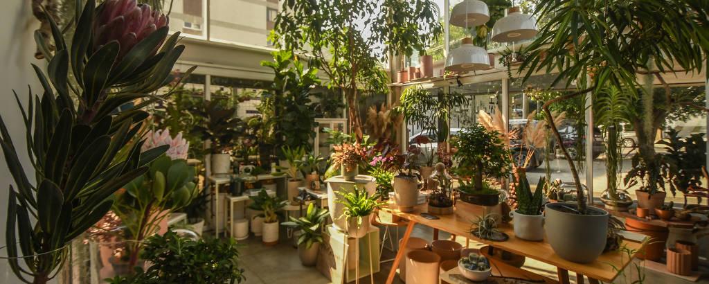 Espaço iluminado cheio de plantas umas diferentes das outras