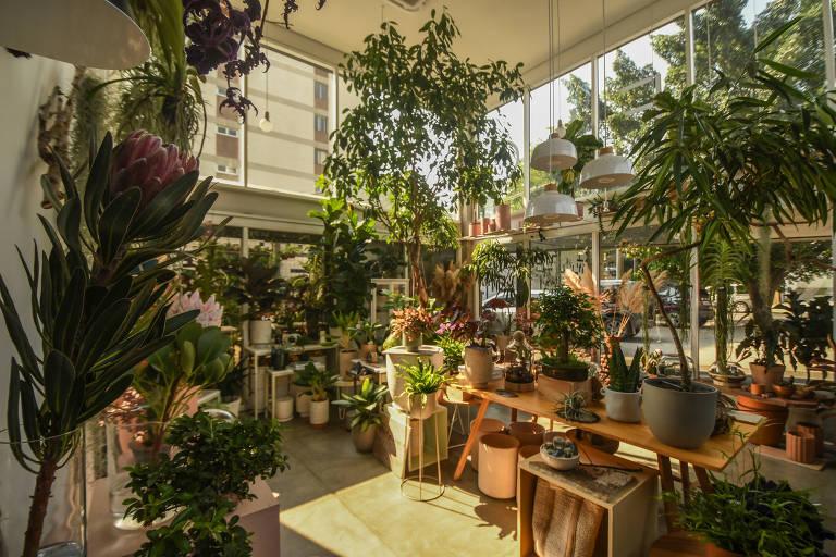 Atelier de plantas com várias espécies espalhadas