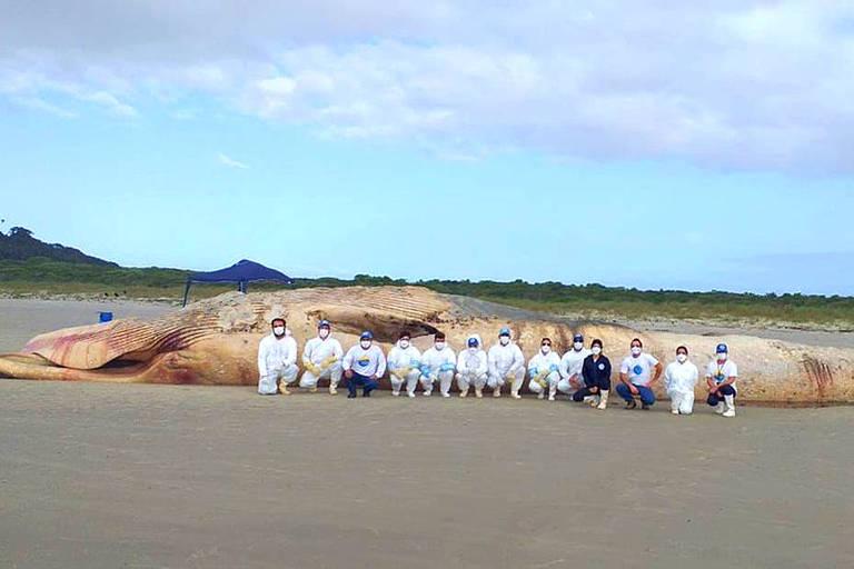Pesquisadores em frente o corpo da baleia encontrada na Ilha do Mel, no Paraná
