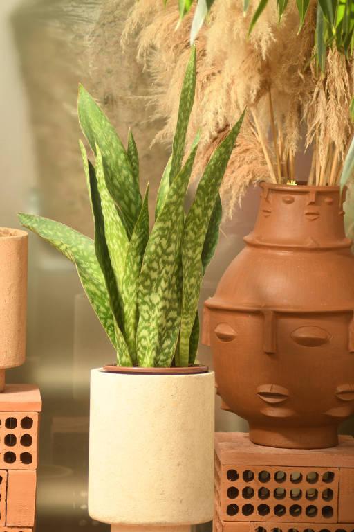 Confira as cinco plantas mais indicadas para lugares com pouca luz natural