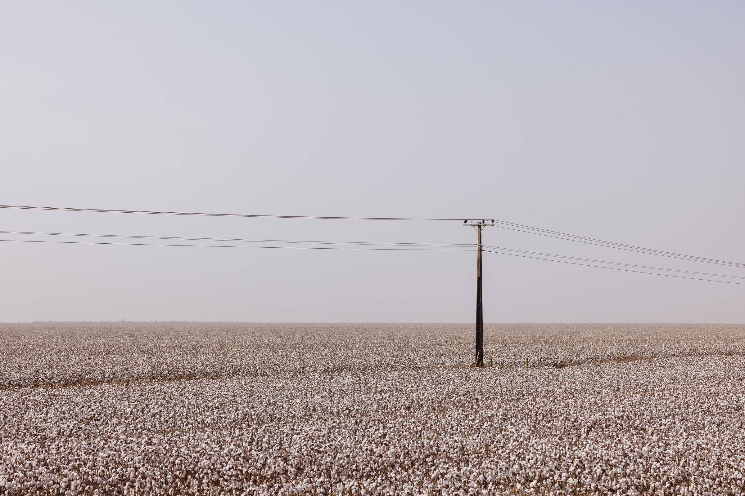 Plantação de algodão localizada às margens da BR-364 próximo a Campo Novo dos Parecis