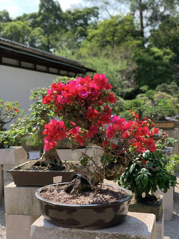 Pavilhão Japonês recebe exposição 'Bonsai  Forma e Tempo'; veja imagens