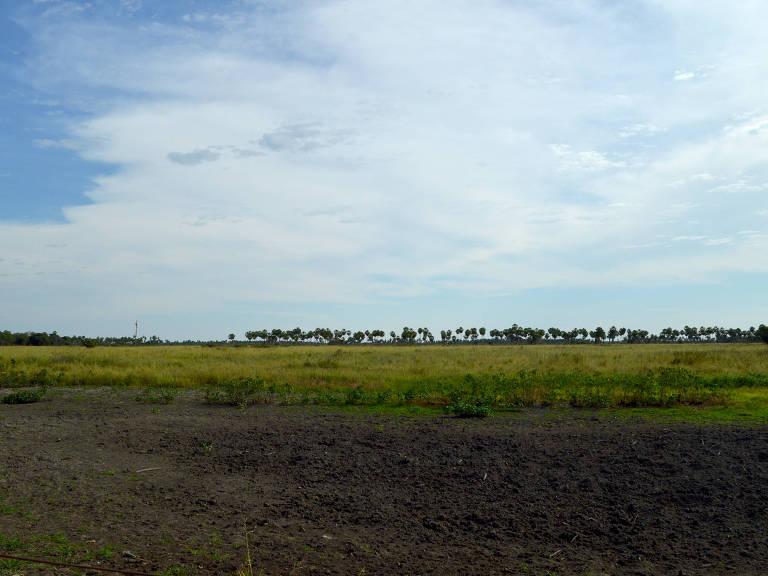 área coberta por terra e capim se estende até o horizonte, onde podem ser avistadas algumas árvores