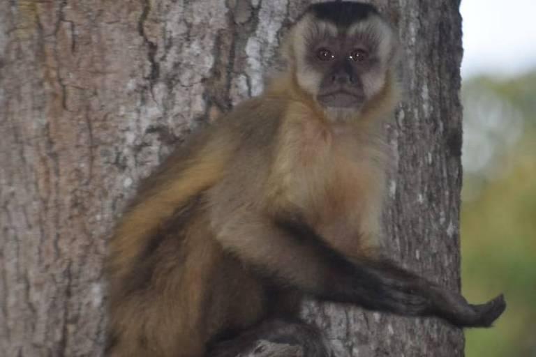 Animais do Pantanal aprendem a 'mendigar comida' para sobreviver na seca