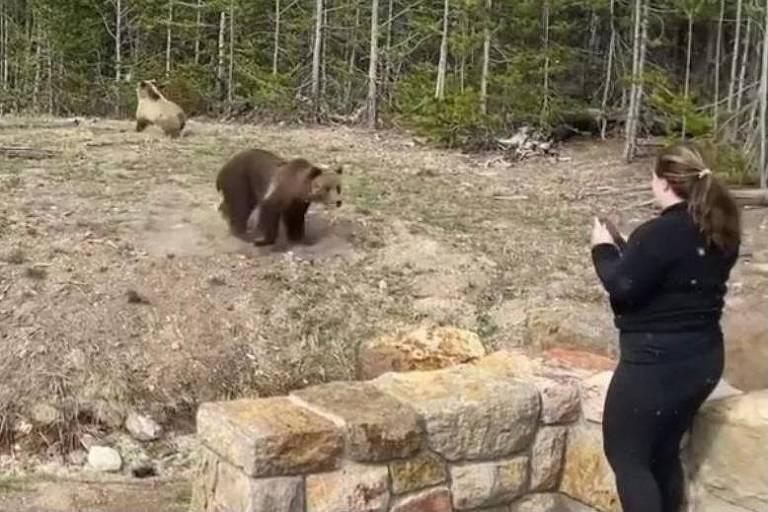 Mulher é presa por se aproximar de urso-pardo para foto em parque nos EUA