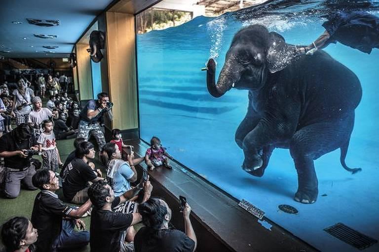 Visitantes de um zoológico na Tailândia observam elefante
