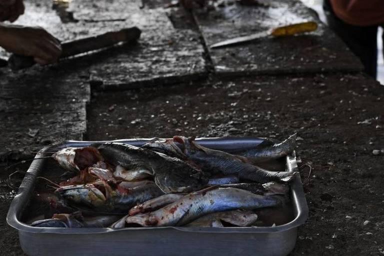 Imagem mostra uma bandeja com peixes
