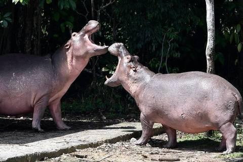 24 dos 80 animais foram esterilizados para conter reprodução