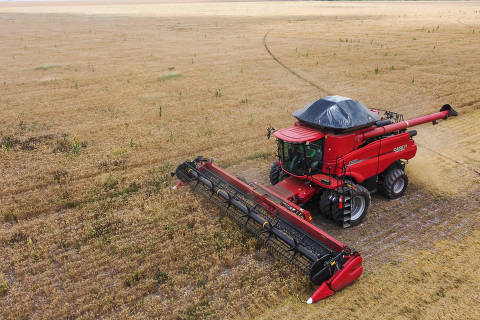 Trigo chega ao Nordeste com alta produtividade e custos mais baixos
