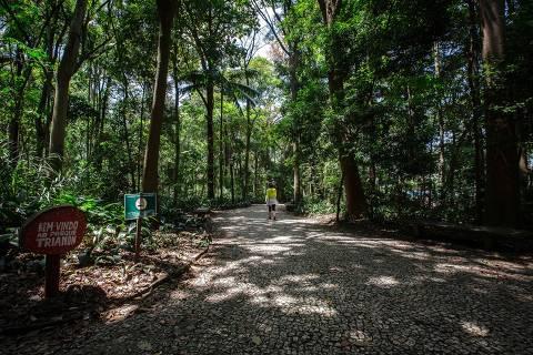 SÃO PAULO, SP, BRASIL, 22-10-2021:  Na foto o parque Trianon, na Avenida Paulista.. (Foto: Bruno Santos/ Folhapress) *** FSP-COTIDIANO *** ORG XMIT: PARQUE TRIANON