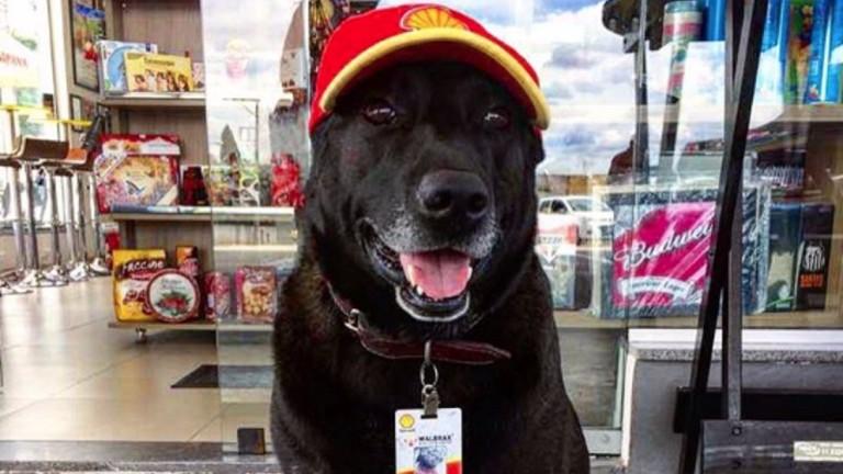 O cachorro Negão, 'funcionário' de um posto em Mogi das Cruzes