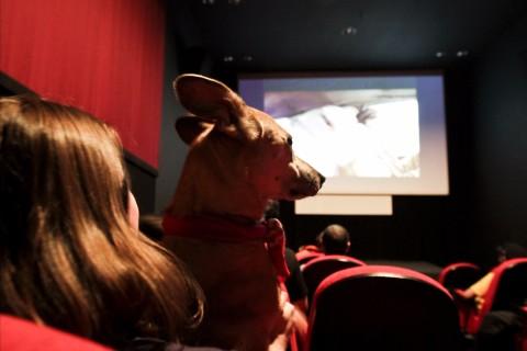 SÃO PAULO, SP, BRASIL, 18-05-2012, 17h: Cinema pra Cachorro: evento PraCachorro tem cinema para os donos e seus cães com filmes temáticos, no Matilha Cultural, em São Paulo (SP). (Foto: Adriano Vizoni/Folhapress, COTIDIANO) *** ****