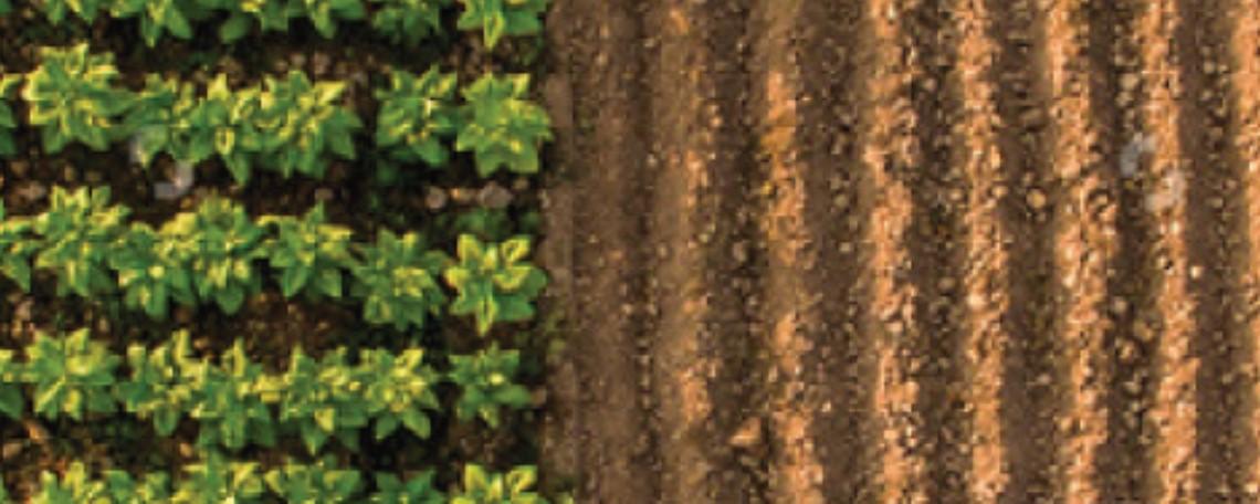 semináriosfolha Agronegócio Sustentável 2ª edição